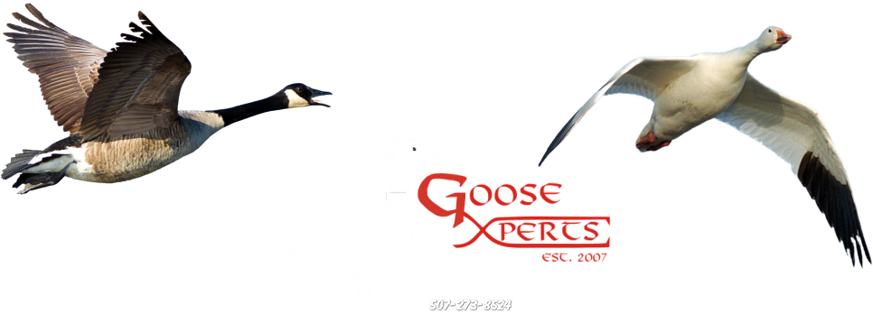 Goose Hunting Guide-Goose Xperts-